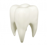 Emergency dentist in Halifax - Loss of a Permanent Tooth